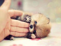Sooo cute. Love this photo