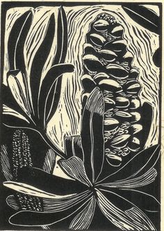 Dark shaded etching of native flora with organic lines Australian Wildflowers, Australian Native Flowers, Australian Art, Botanical Drawings, Botanical Illustration, Botanical Prints, Illustration Art, Linocut Prints, Art Prints