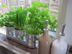Kitchen Window Herb Garden With Charming Silver Pot Ideas Fascinating - Kitchen garden window ideas Kitchen Garden Window, Herb Garden In Kitchen, Garden Windows, Herbs Garden, Kitchen Room Design, Kitchen Sink, Herbs Indoors, Garden Photos, Window Design