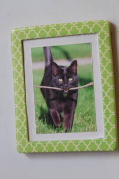 magnetic frame with photography print of a cat by naturisticimages