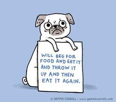 Gemma Corrells Drawings of Things. - funny cute pug