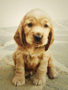 Puppy by ~AnetaVirt on deviantART
