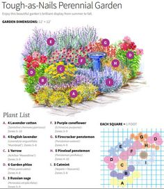 - Tough-as-Nails Perennial Garden Plan P.-- – Tough-as-Nails Perennial Garden Plan Plant it and (ALMOST) forget it! This garden is filled with tough-as-nails perennials that come back each year. Perennial Garden Plans, Flower Garden Plans, Diy Garden, Garden Ideas, Perennial Vegetables, Garden Care, Flower Garden Design, Flowers Garden, Small Garden Plans