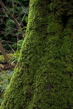 In the forest - Tree Moss