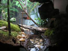 Temperate Forest Vivarium - very cool set-up with river and bridges. Turtle Aquarium, Aquarium Fish, Crested Gecko Vivarium, Turtle Habitat, Gecko Habitat, Gecko Terrarium, Reptile Room, Reptile Cage, Tropical Freshwater Fish