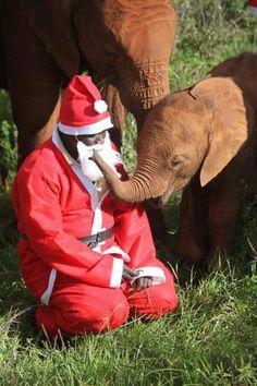 Santas Elephant