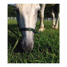 Blackberry Farm: Meet Herman, a beautiful white horse! www.blackberryfarm.com
