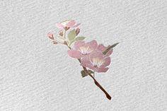 Blossom - Gyümölcsfa virág