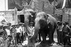 En una época, tener animales dentro de los circos era un atractivo para generar más público. Ahora se considera como maltrato y abuso por parte de los humanos, aunque siguen existiendo shows con estos seres ¿Cuál es su posición al respecto?