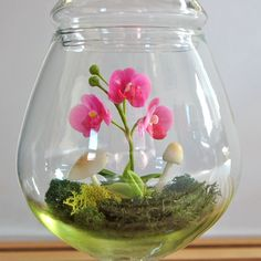 Tiny Pink Phalaenopsis Moth Orchid Terrarium by Miss Moss Gifts