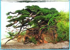 An incredible sense of flow with this small tank, that ranked 2nd in the nano category of the 2013 AGA contest. Tree on the Rock by Harry Kwong, 32lmore photos here