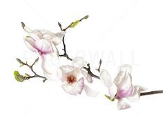 Orchid Buds - Fototapeter & Tapeter - Photowall