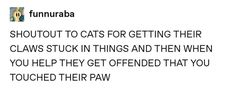 38 Times Tumblr Really Understood What Cats Are All About Cats Tumblr, Funny Tumblr Posts, What Cat, Funny Cat Pictures, Animal Quotes, Text Posts, Funny Cute, Super Funny, Funny Memes