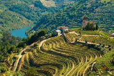 Vendimia en el Valle del Douro | via @CNTravelerSpain | 17/09/2014 Esta tierra tiene historia. Desde tiempos remotos los hombres que la habitaron supieron mimar uno de los mayores dones que les había dado la naturaleza: la vid...Además, justo a finales de septiembre y principios de octubre es la época perfecta para vivir todo lo que puede ofrecer el Douro, pues es el momento álgido de la vendimia. #Portugal