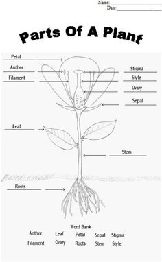Plant Parts and Functions Cut and Paste Activities | Plant science ...