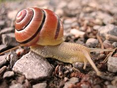 At A Snail's Pace ~ Snails & Snail Mail