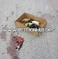 Urge The Police To Charge The Person That Abandoned Puppies In The Road Sentencing Them To Die! | PetitionHub.org