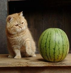 Fear of Melons