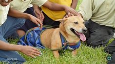 Maria the corgi mix teaches school children compassion for those with special needs