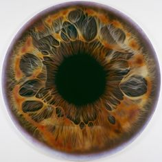 The eye a microscopic map of an individual's identity.  Photo-realist Paintings: The Iris by Marc Quinn. # Art