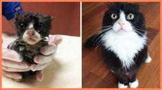 Картинки по запросу самые ужасные бездомные животные