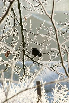 Branches and a bird make an interesting silhouette in winter.