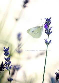 Behold the delicate side of nature captured by Laura Esse