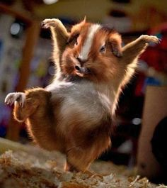 Le Petit Chouchou  Imitation of Kung Fu Panda