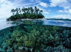 Рай для дайверов и раздолье для ботаников. Папуа — Новая Гвинея. Второй по величине остров в мире и последний тропический рай с непроходимыми тропическими лесами на суше и бескрайними насыщенными жизнью коралловыми рифами на воде.