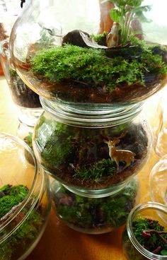 How to make a terrarium, including helpful graphics of the soil needed Moss Terrarium, Garden Terrarium, Terrarium Ideas, Terrarium Decorations, Wall Terrarium, Bonsai, How To Make Terrariums, Decoration Plante, Pot Plante