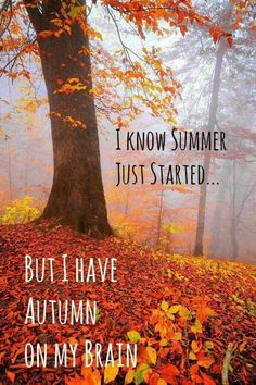 So true for me. I love the cooler air and vivid colors of Fall more than the heat of Summer.