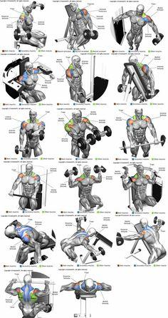 -Variações no treino de Ombro. Baixe a imagem para visualizar em alta qualidade.