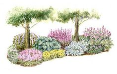 •Side Yard Garden for Shade Have you been wondering what to do with the shady area along your house? Try this garden plan perfect for long and narrow shaded side yards. It's filled with great, easy-growing plants to enjoy through the seasons. Garden size: 26 by 10 feet. •Download this free garden plan.