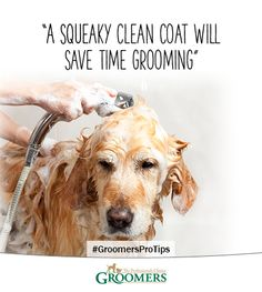 Save Grooming Time