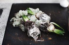 Fuska dig till ett enkelt hyacintarrangemang