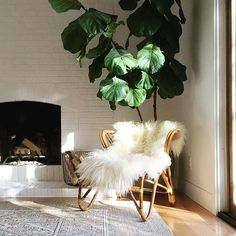 Struggling to find the perfect chair for this corner (normally the fig isn't there)! I want something rounded and comfy and modern that we can put our feet up in...secretly hoping for a womb chair but can't yet justify the price, even for a knock-off. Suggestions? (sources tagged) #Regram via @annabode