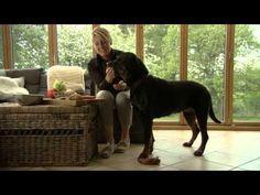 Dansk Kennel Klub - Introfilm til serien 'Skyd ikke hunden' - YouTube