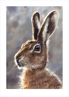 Hare Wildlife Portrait by award winning artist JOHN SILVER. Personally signed A4 or A3 size Print. HA002SP