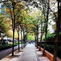Hornby Street, downtown in front of the Law Courts - Photo by morgananana_