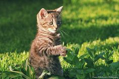 OMG! Mice are coming! by Zoran Milutinovic on 500px