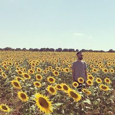 "188 Likes, 1 Comments - Ru (@ru_masa) on Instagram: "" #julio #vacacionessantillana #verano #buscandoawally #mardegirasoles"" sunflower valley"