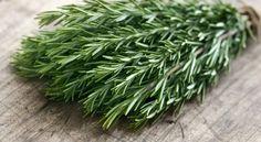 Existe um forte vínculo entre o cheiro desta erva natural e a função cognitiva melhorada, ou para ser mais específico, para a retenção de memória!