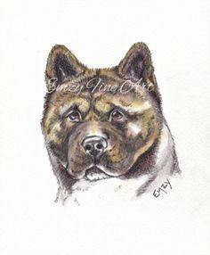 Akita Small Head Study in Watercolour Pencil