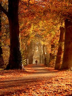 Autumn in New England---some of my favorite childhood memories are of kicking up the beautiful leaves New England Fall, Autumn Scenes, Seasons Of The Year, Belle Photo, Autumn Leaves, Fallen Leaves, Paths, Beautiful Places, Scenery