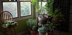 9 Houseplants That Clean The Air And Are Basically Impossible To Kill | (well, some of them - peace lily is quite easy to kill)
