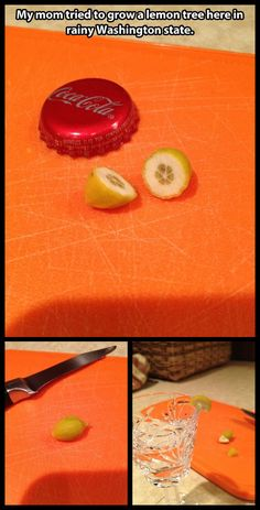 Growing a lemon tree //