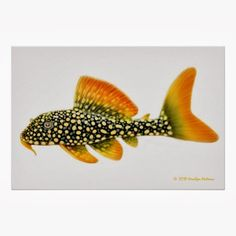 Summary: Many people are delighted by keeping live and colorful tropical fish at their home. Countless species of fish are kept at home as pets. There are several Tropical fish online stores that sell tropical fish online. Tropical Aquarium, Saltwater Aquarium, Tropical Fish, Tropical Freshwater Fish, Freshwater Aquarium Fish, Pleco Fish, One Fish Two Fish, Fish Fish, Plecostomus