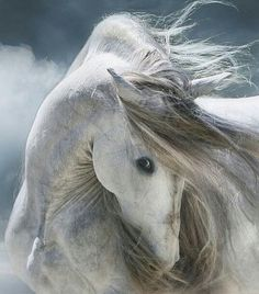 Image result for horse beautiful mane