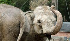 Ein Elefant braucht Hilfe!