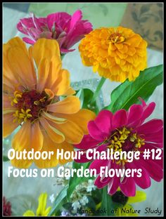 Outdoor Hour Challenge #12 Focus on Garden Flowers